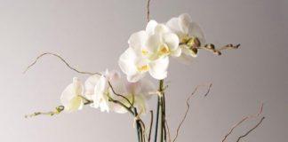 Orkide Çiçeğinin Bakımı Nasıl Yapılır ?