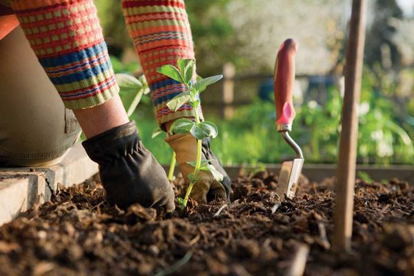 organik tarım nedir ?